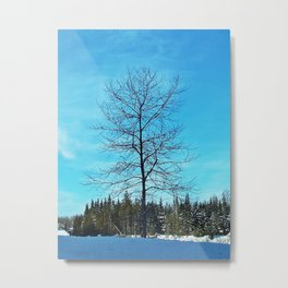 Alone and Leafless Metal Print