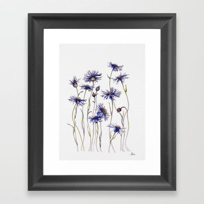 Blue Cornflowers, Illustration Gerahmter Kunstdruck