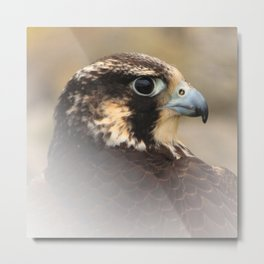 Vignetted Profile of a Peregrine Falcon Metal Print