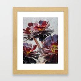 Succluents  Framed Art Print