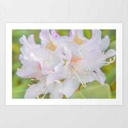 Soft White Flora Art Print
