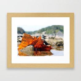 Red Leaf in River Framed Art Print