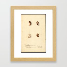 Cashew Nuts Framed Art Print