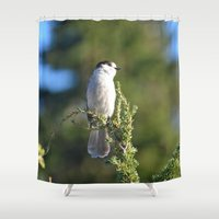 jay z Shower Curtains featuring Gray Jay by Lena Photo Art
