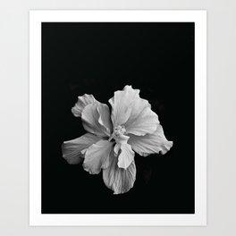 Hibiscus Drama Study - Black & White High Impact Photography Art Print