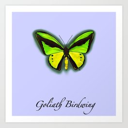 Goliath Birdwing Butterfy Art Print