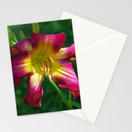 Raspberry and gold daylily flower - Hemerocallis 'Liberty Banner' Stationery Cards