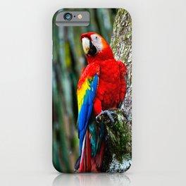 Scarlet Macaw Bird Costa Rica iPhone Case