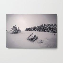 """Sierra Nevada snow pines"" . Into the woods. Metal Print"