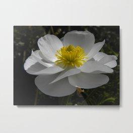 Mount Cook Lily Metal Print