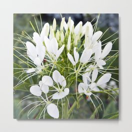WHITE MAGIC BLOSSOMS Metal Print