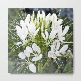 WHITE MAGIC BLOSSOMS Metal Print
