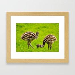 Baby Emus Framed Art Print