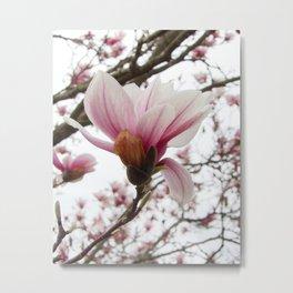 magnolia ice Metal Print