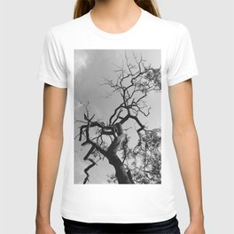 Old Spooky Bare Tree Branches T-shirt