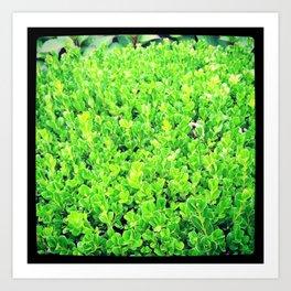 Green Bush Art Print
