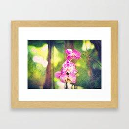 Orchid Impressions Framed Art Print
