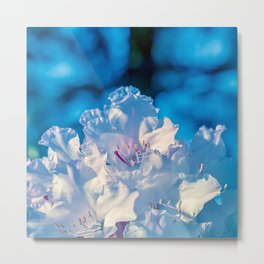Blue Rhododendron Metal Print
