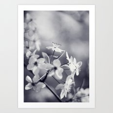 Pear Blossoms in Black and White Art Print