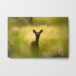Keeping Tabs - Watchful Young Deer Through Tree Leaves in Wyoming Metal Print