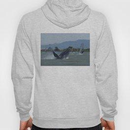 Humpback Whale Breaching by Windsurfers Hoody