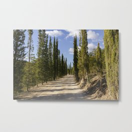 Tuscan Cypresses Road Metal Print