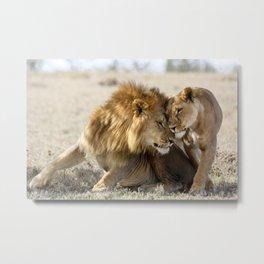 Lions in Love Metal Print