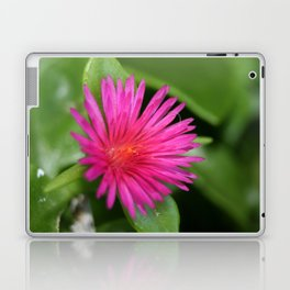 Pink Flower of Succulent Carpet Weed  Laptop & iPad Skin