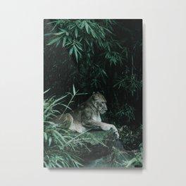 Leonessa Metal Print
