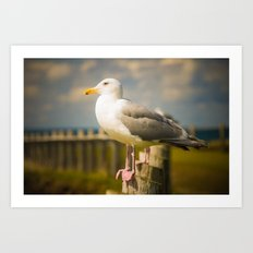 Seagull on a Fence Art Print