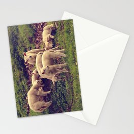 Lambs Stationery Cards