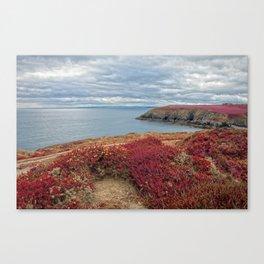 Irish Pomegranate Coast Canvas Print