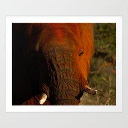 In the eye of the Elephant Art Print