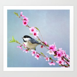 Carolina Chickadee and Peach Blossoms Art Print