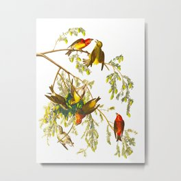 American Crossbill John James Audubon Vintage Scientific Hand Drawn Illustration Birds Metal Print
