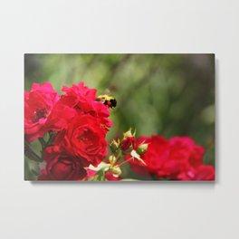 Sweet Rose Honey Bee Metal Print