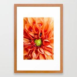 Petal Purity Framed Art Print