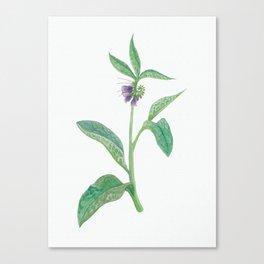 Comfrey Herb Canvas Print