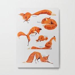 Fox poses Metal Print