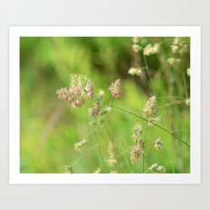 Country Road Side Blooms Art Print