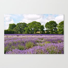 Hampshire Lavender Fields Canvas Print