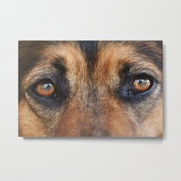 Portrait of a brown dog Metal Print