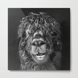 Alpaca. Happy Dayz Metal Print