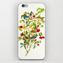 Warbler John James Audubon Scientific Vintage Illustrations Of American Birds iPhone Skin