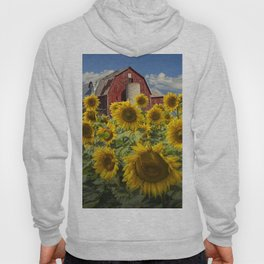 Golden Blooming Sunflowers with Red Barn Hoody