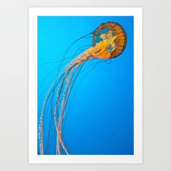 Animality: Jellyfish, Solo. Art Print
