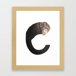 C-Chimpanzee Framed Art Print