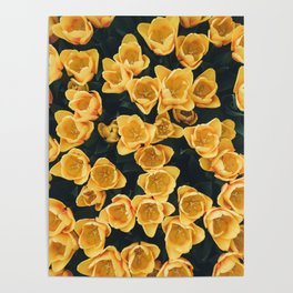 Yellow Tulips From Above Poster