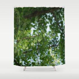 Ginkgo biloba tree in the city Shower Curtain