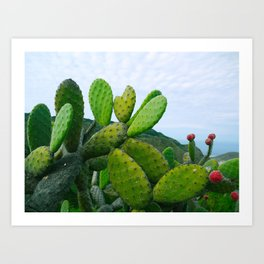Prickly Pear Opuntia Succulent Art Print